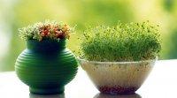 من امسال، بدون عذاب وجدان، سبزه سبز میکنم.!