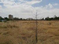 خیر البرزی ۱۰ هزار متر مربع زمین برای ساخت هنرستان اهدا کرد